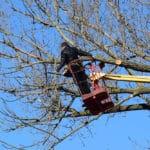 Baumpflege und Baumschäden: Die wichtigsten Informationen für gesunde Bäume